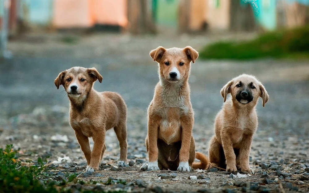 У Франківську контролюють кількість безпритульних тварин