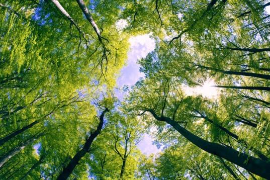 Лісові ресурси поповнили бюджет Волині на 10 мільйонів гривень